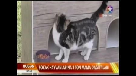 Sokak Hayvanlarına 3 Ton Mama Dağıtıldı-STAR TV